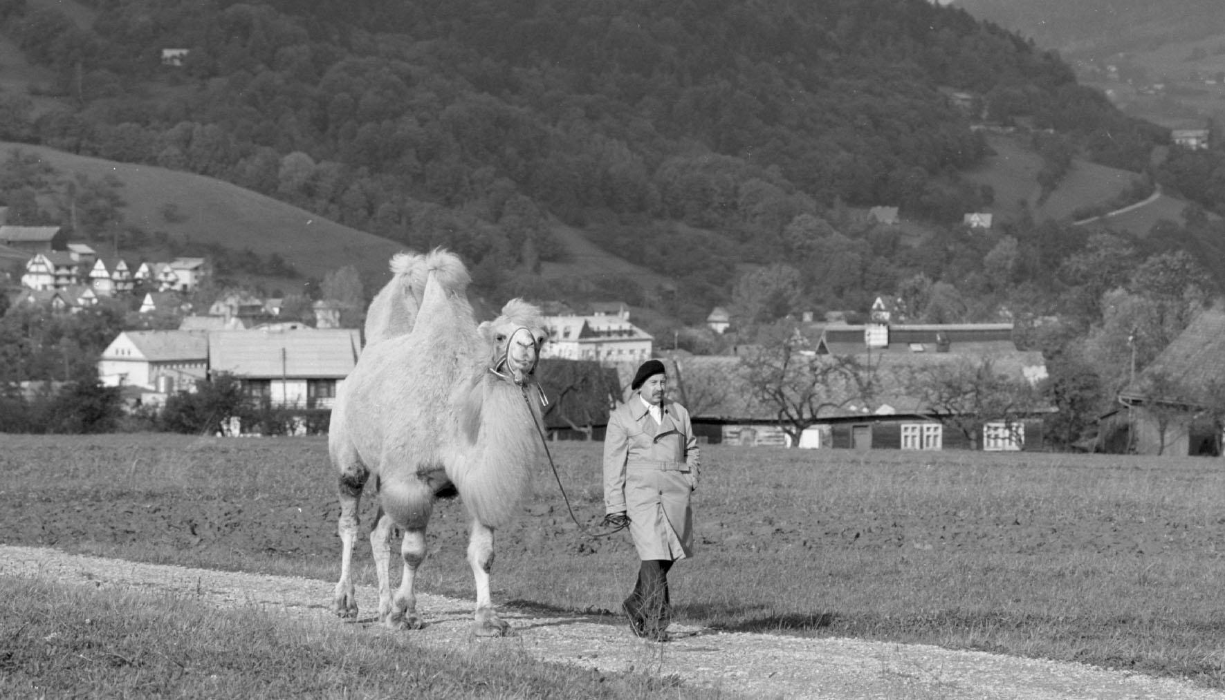 Duże zwierzę – bliskie spotkania trzeciego stopnia